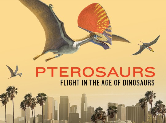 NHMLA's Special Exhibit, Pterosaurs: Flight In the Age of Dinosaurs