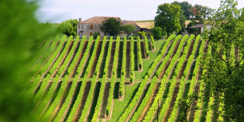 Summer in Provence Wine Dinner