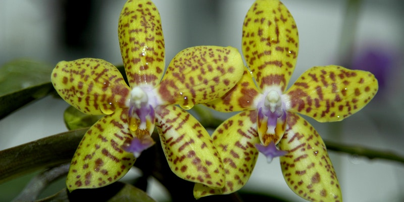 Getting to Know Orchids: An Introduction