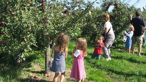 19th Annual Wayne County Apple Tasting Tour