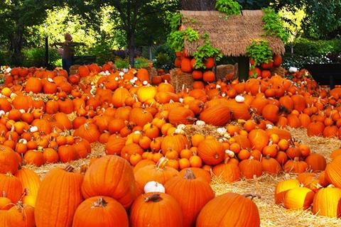 Best Pumpkin Patches in Southern California