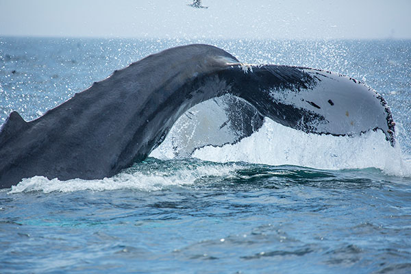 Whale Watch at Boston Harbor Cruises