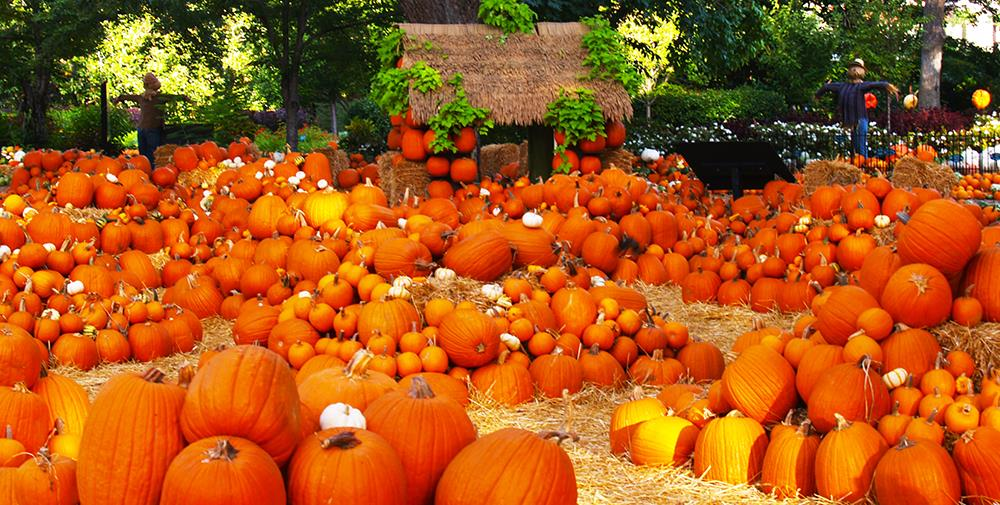 With October Nearly Upon Us It S Time To Start Thinking About Grabbing A Pumpkin And Enjoying Some Fun Festive Patches In Southern California