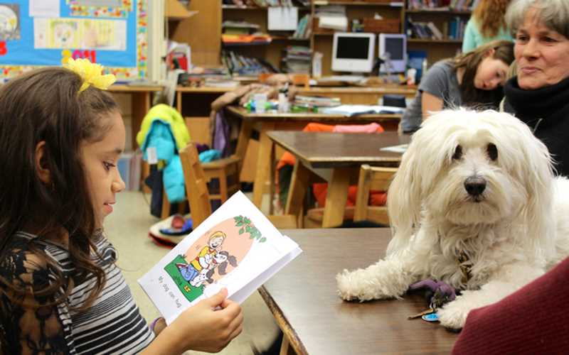 Read To A Dog At Sussex County Library